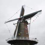 Korenmolen Rijn & Weert